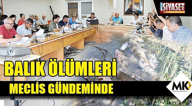 Balık ölümleri meclis gündeminde