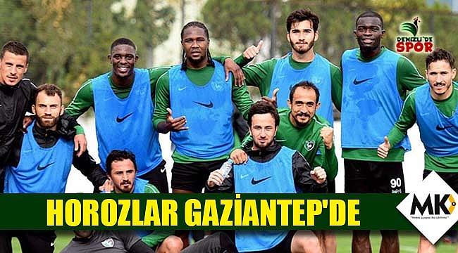 Horozlar Gaziantep'de