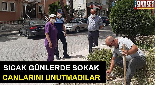 Buldan Belediyesi, sokak hayvanları için mama ve su kabı bıraktı