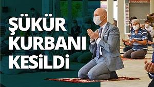 Sarayköy'de şükür kurbanı kesildi